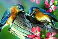 Spring email backgrounds. Spring Flowers And Birds