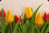 Spring email backgrounds. Cheerful Tulips 2