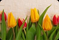 Cheerful Tulips 2 Background