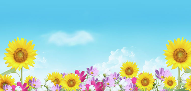 Summer Email Stationery Stationary Flowers