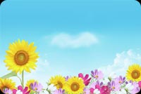 Summer email backgrounds. Summer Flowers