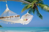 Summer email backgrounds. Beach Palm Tree Hammock