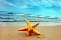 Starfish On The Beach Background