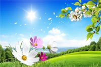 Sunny Summer Day Background