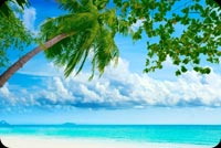 Summer Beach Palm Tree Background