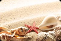 Starfish Seashell On Sand Background
