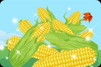 Thanksgiving email backgrounds. Sweet Corn