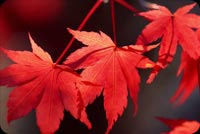 Exquisite Fall Leaves Background