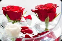 Love Roses Background