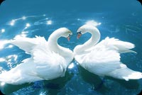 Valentines day email backgrounds. Love Birds
