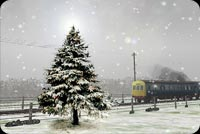 Winter email backgrounds. Christmas Tree & A Train